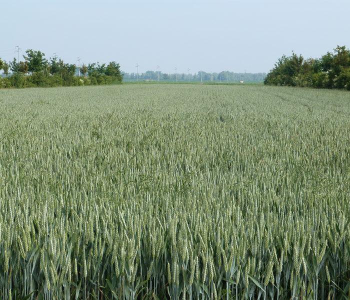 L'agricoltura causa modifiche degli equilibri ecologici